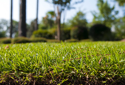 Rockford Lawns Need Lawn Core Aeration